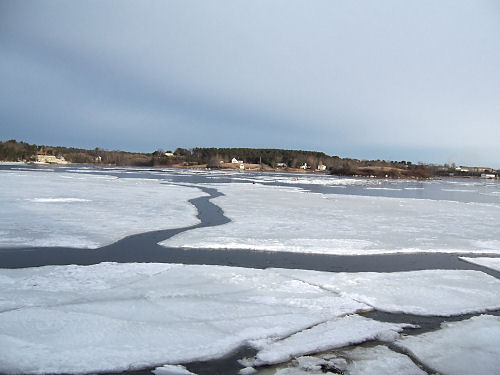 Great sheets of ice have broken away and are ready to float out of the cove with the wind and tide.