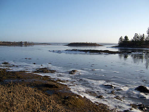 On a cold morning the receding tide leaves a film of ice on the seaweed and rocks along the shore.  Nova Scotia is blessed with natural shorelines like this, a haven for wildlife which is threatened by development.