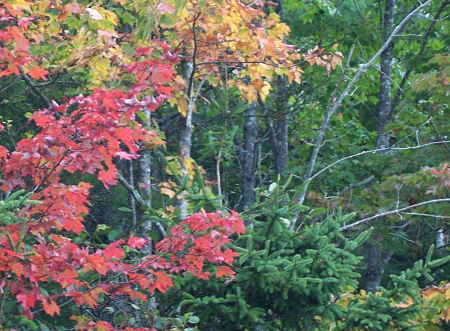 There's a chill in the air, a touch of frost, and a splash of colour in the maple leaves.