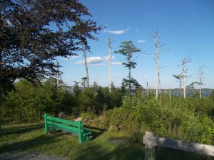 8 years after Hurricane Juan, Point Pleasant Park still looked ragged.